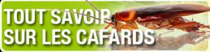 CAFARD1-300x75