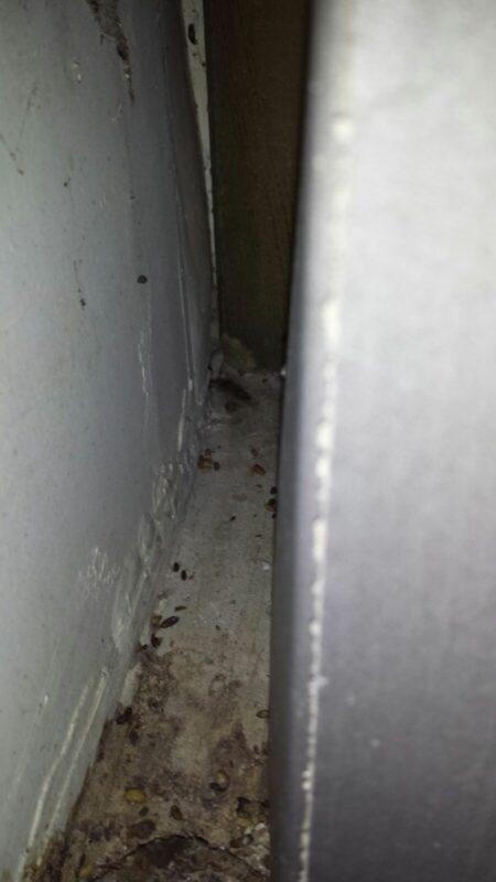 Eradiquer les moucherons comment liminer et se dbarrasser des mouches elegant comment tuer les - Comment tuer les moucherons ...