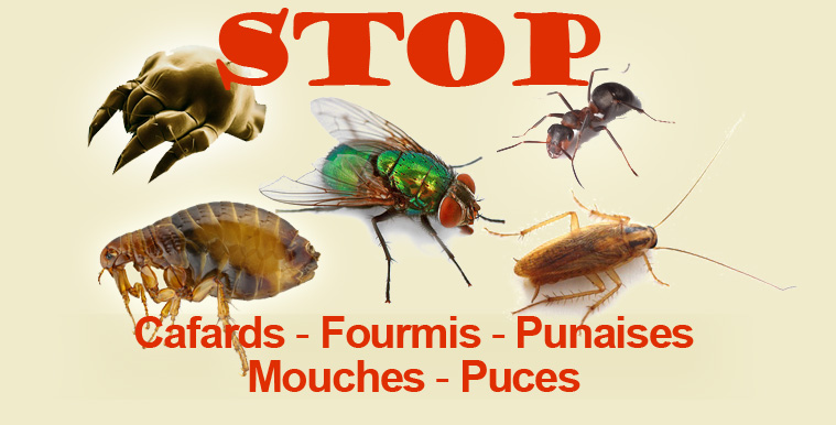 stopinsectes