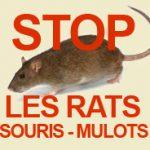 Problème de rats Paris